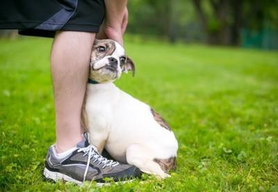 人の足元にくっついている犬