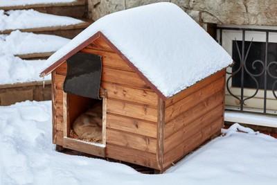 雪が積もった犬小屋の中で丸まる犬