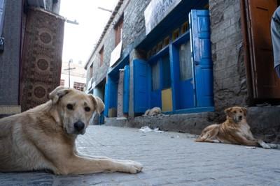 道端で休む野良犬たち