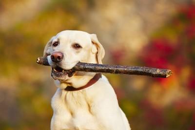 大型犬と木の棒