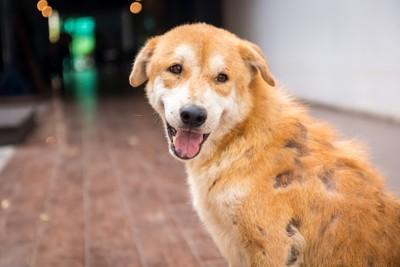 皮膚病で脱毛した犬