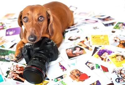 たくさんの写真の上でカメラに手をかける犬