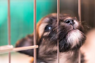 ケージの網に鼻を突っ込む犬