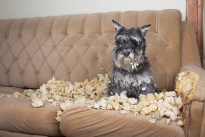 破壊する犬