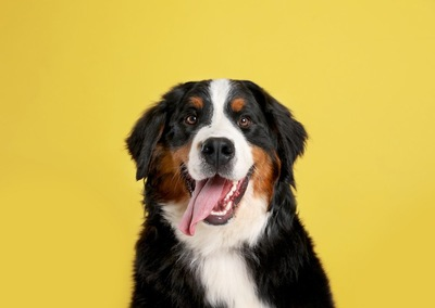 笑顔で見つめる犬
