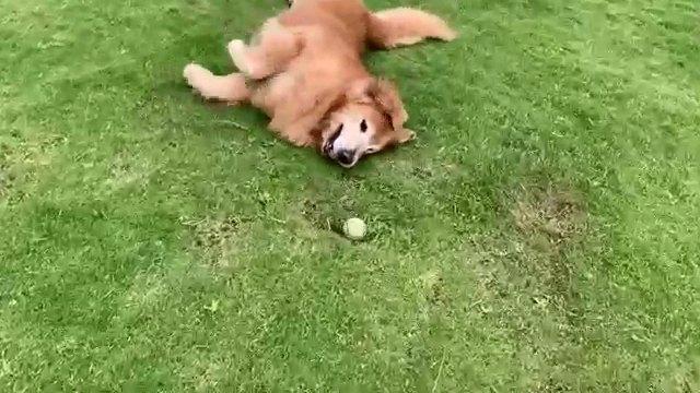 寝転がる犬