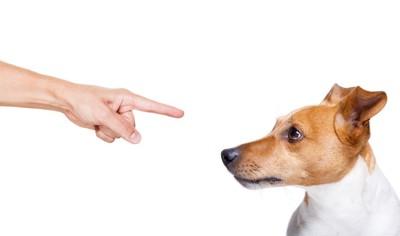 指を差される犬
