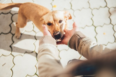 犬を触ろうとする人間の手と犬