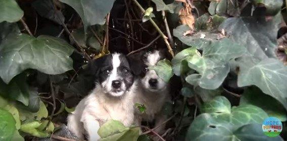 茂みからのぞく子犬