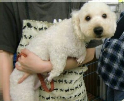 トリマーさんに抱っこされる愛犬