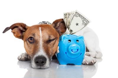 貯金箱と片目を閉じる犬