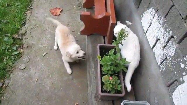 犬と植木に隠れる猫