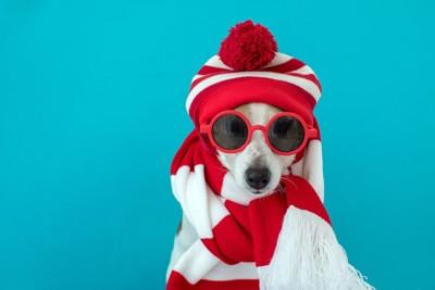 マフラーを巻いて帽子を被ってサングラスをした犬