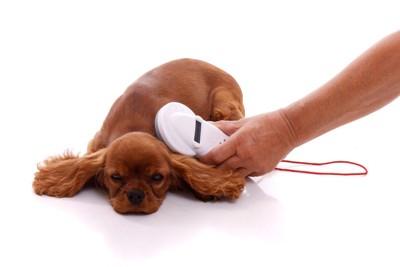 マイクロチップを読み取られる犬