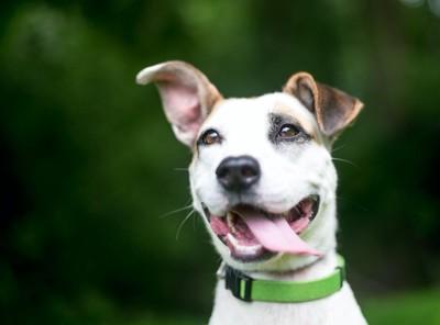 プラスチックの留め具の首輪をした犬