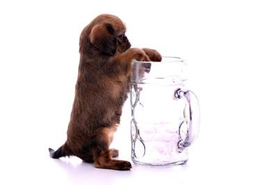 グラスに手をかける子犬