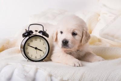 時計と子犬
