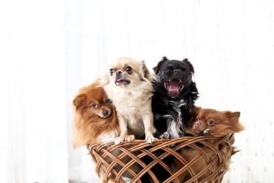 かごに入った小型犬