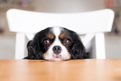 テーブルにあごを乗せている犬