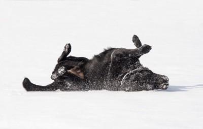 体をこすりつける犬