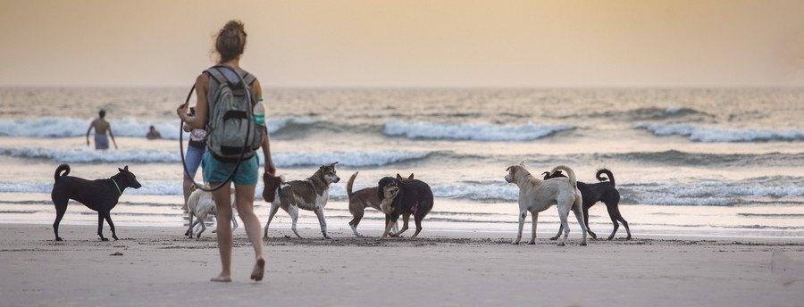 海岸にいる犬の群れ