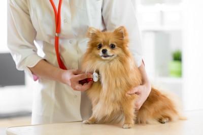 病院で聴診器を当てられている犬