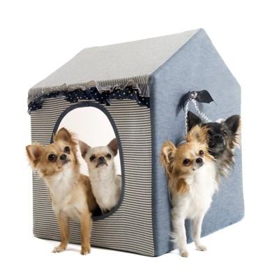 室内用の犬小屋の中の犬達