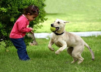 犬と遊ぶ小さい女の子