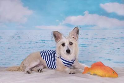 スイムウエアみたいな服を着てる犬