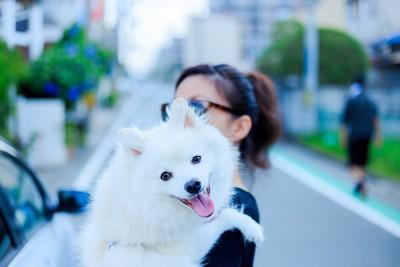 抱っこされてうれしそうなスピッツ系の白い犬