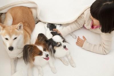 複数の犬と遊ぶ飼い主