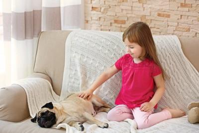ソファーの上でパグを撫でる女の子