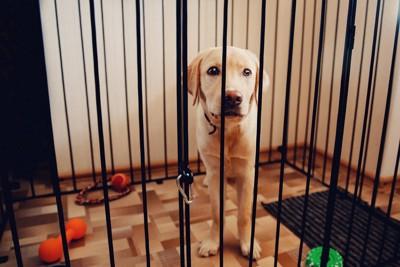 サークル内の犬