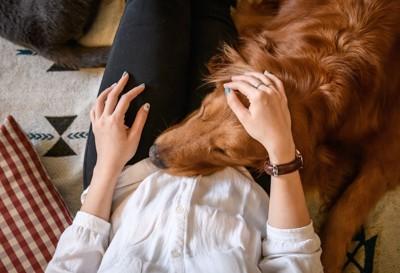 女性の足に頭を乗せる犬