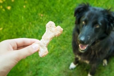 飼い主の持っているクッキーを見つめている犬