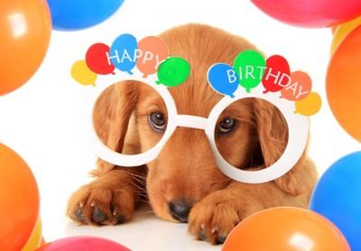 ハッピーバースデイの眼鏡をかけた犬