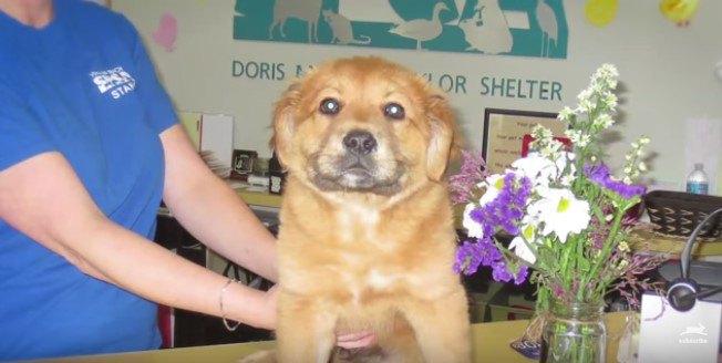 カウンターの上に座る子犬