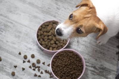 2種類のフードの前で悩む犬