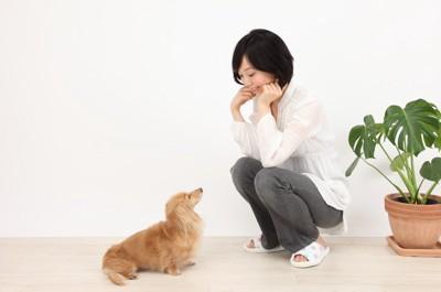座る愛犬を見つめる女性