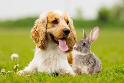 芝生の上でリラックスする犬とうさぎ