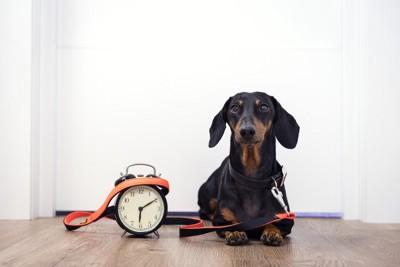 リードと時計を持っている犬