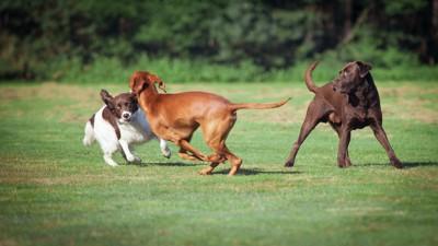 オフリードで遊ぶ3匹の犬
