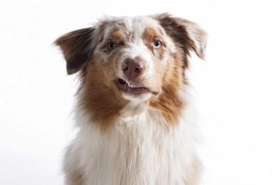 不機嫌そうな表情をする犬