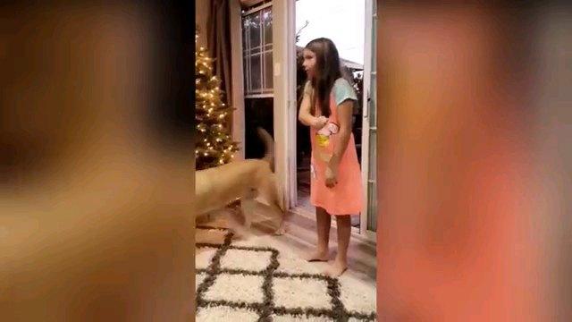 部家に入る犬