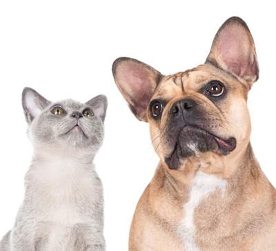 猫とフレンチブルドッグ