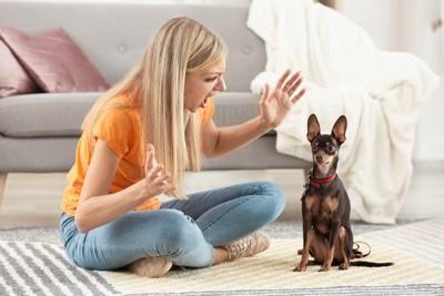 犬を叱る人