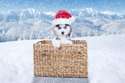サンタの帽子をかぶっている犬