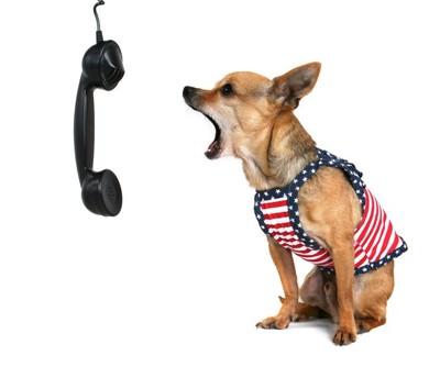 電話に吠える犬