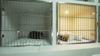 隣のケージに入れられた犬と猫