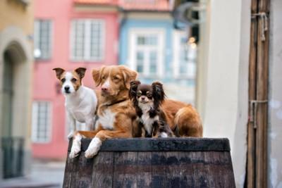 サイズのちがう3頭の犬